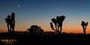 Crescent moon at sunset.  Joshua Tree National Park