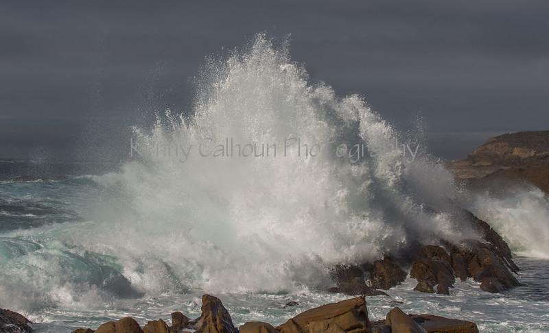 Point Lobos _N5A8583