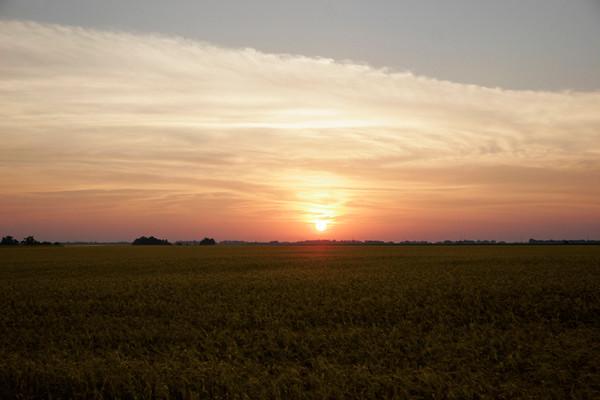 Wheat Sunrise II
