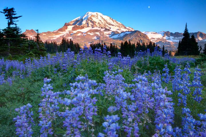 Spray Park / Mt. Rainier National Park, Washington