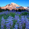 Spray Park / Mt. Rainier National Park, Washington