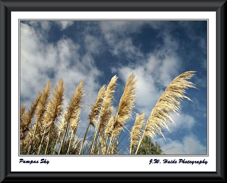 Pampas Sky
