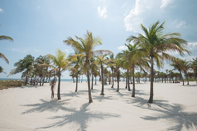 """""""All I need are palm trees and a little bit of paradise."""" - unknown   Anyone else agree? 🙋♀️🌞🌴⛱🏝"""