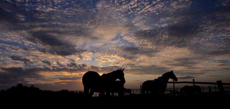 Castillos, Uruguay, Jan 2010