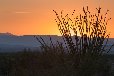 Ocotillo Sunset In Big Bend NP