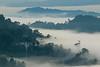 Danum Valley Sunrise