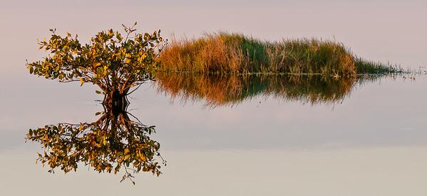 Marsh Grass and Mangrove