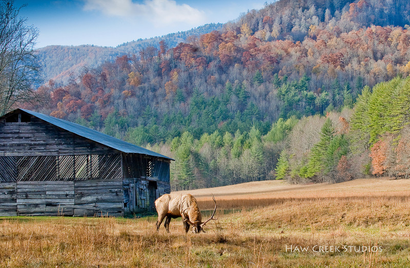 Fall in the Catalochee Valley of Western North Carolina.