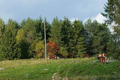Laidun - Field