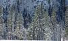 Yosemite Fire Falls-0155