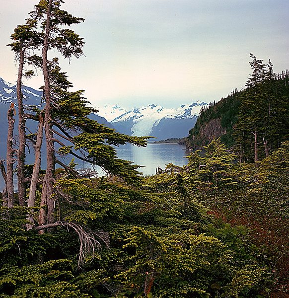 Harriman Fjord, Alaska