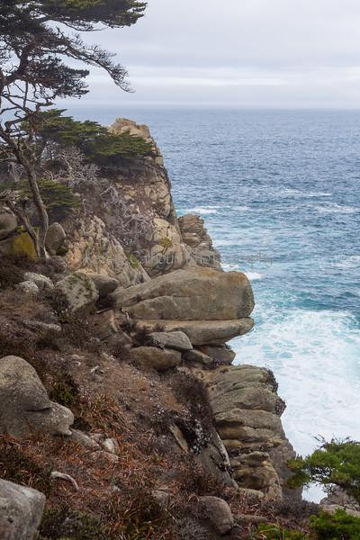 Point Lobos _N5A8365