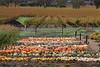 Napa_and_Sonoma_RainNovember_16,_20121N5A6531untitled