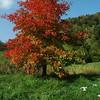 Arboretum Aubonne 15 10 2006 (10)