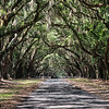 Colonial avenue of live oaks, Wormsloe State Historic Site, Skidaway Road, Savannah, Georgia