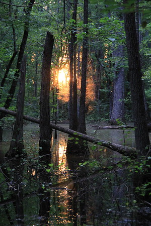 Bogged Down (Sunset in a Gerorgia swamp)