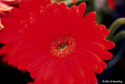 Red flower_web