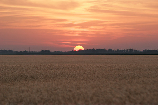 Wheat Sunrise