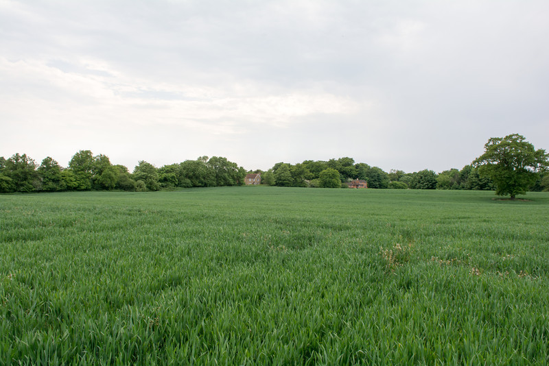 The Field (2)