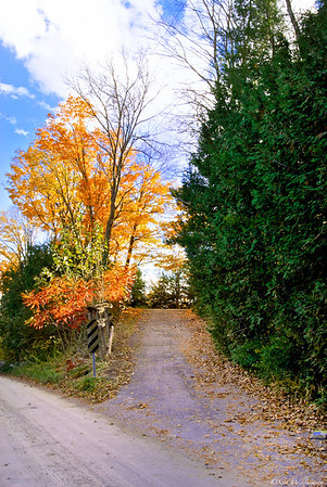 Colourful Driveway