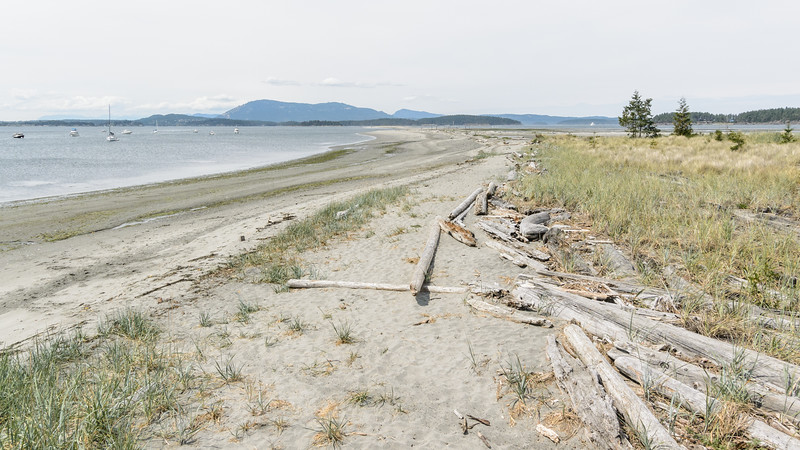 Sidney Spit - low tide