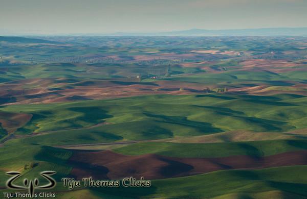 Wheat fields / Palouse / Washington