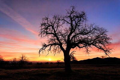Lone Tree Sunrise