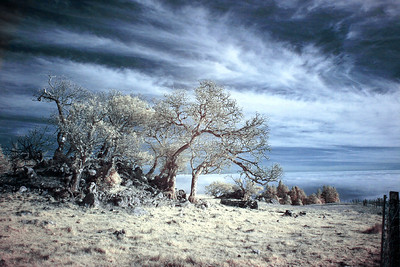 Meyers Grade - False Color IR