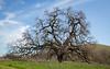 Bruces Oak Valley-1447