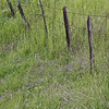 Old Fence on Grassy Hill