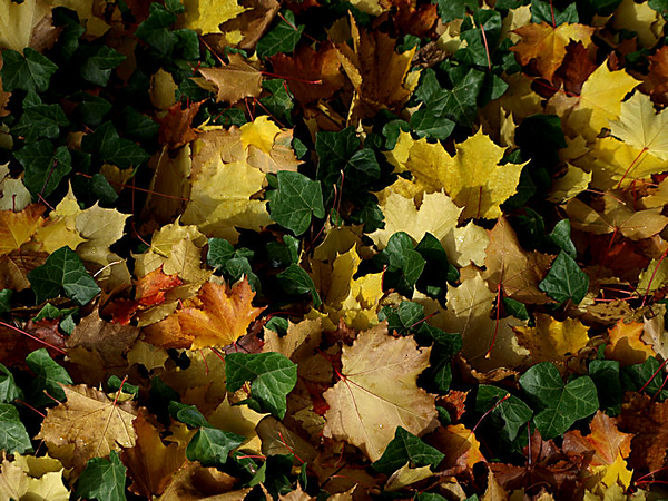 Random Leaf Fall