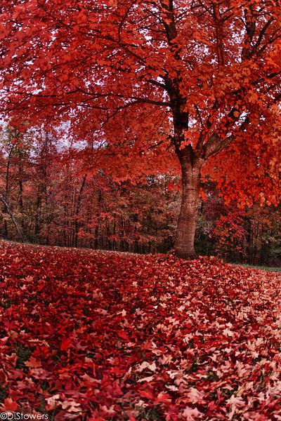 JPG-DLS-Nov2011-_MG_0952_HDR