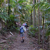 The track up to Mount Warning