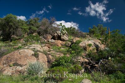 Landscape; Mount Hopkins Road, Santa Rita Mountains, Coronado National Forest, Santa Cruz County, Arizona 7-28-08 35