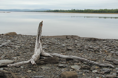 Driftwood on Northern Maine Lake