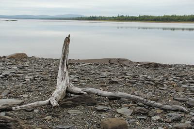 Driftwood on Northern Maine Lake