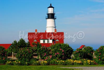 """Flowering Lighthouse"""