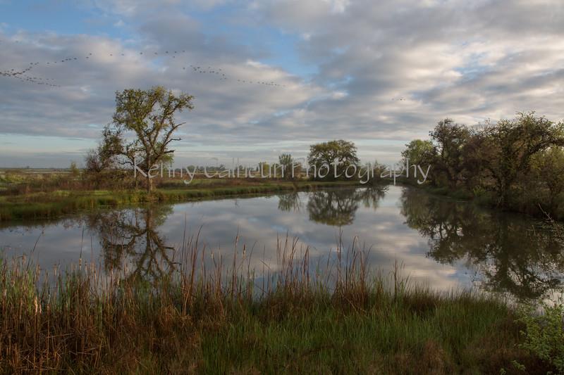 Consumnes River Landscape _N5A9751