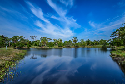 A Day in the Park - Wickham Park, Melbourne, FL