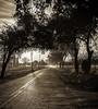 Nelson Grove Road Sunrise_N5A0087-Edit