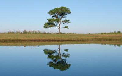 Lone Pine on the pond, Cherrystone Campground, Va.