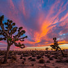 Sunset - Joshua Tree