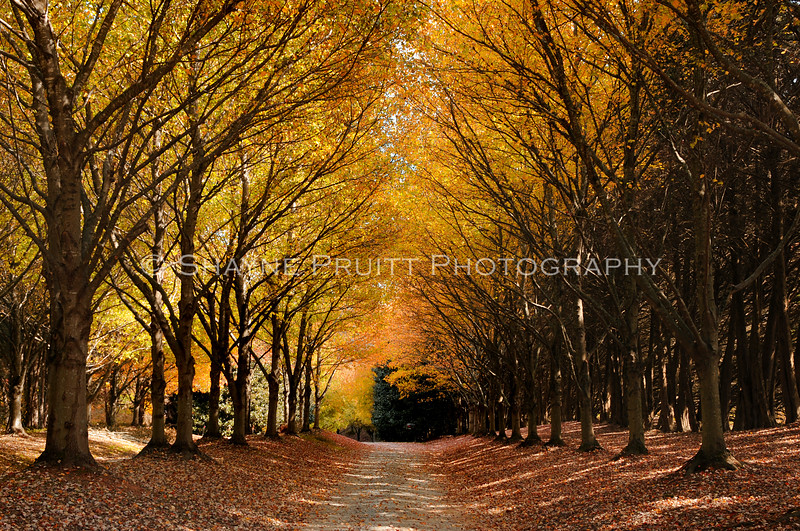 Scene off Yellow Creek Road in Ball Ground, Georgia. Beautiful canopy of trees and their fall colors