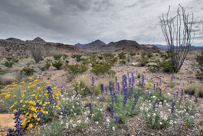 Big Bend National Park in the spring of 2015