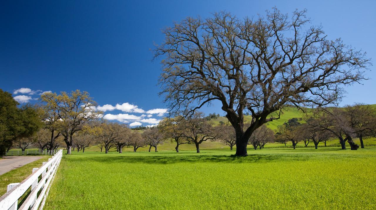 Santa Ynez Valley_031210_0006