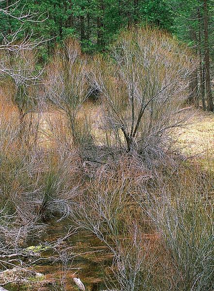Wetland, Yosemite National Park, California