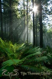Cascade Head Preserve / Oregon Coast / Oregon