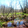 Swamp Brookstone Meadows