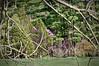 113 Shaw Garden 4-20-2008 - Trees