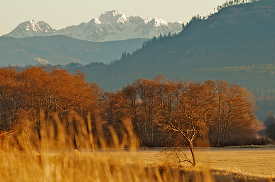 Skagit Valley, Washington 5